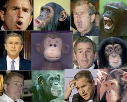 Curious George W. Bush - Miserable Failure - Funny Picture